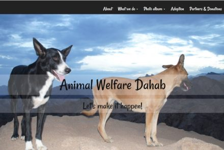 Good Cause project: Website Animal Welfare Dahab